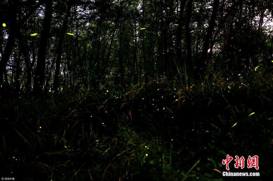 """浙江九龙国家湿地公园""""萤光海""""如繁星闪烁"""